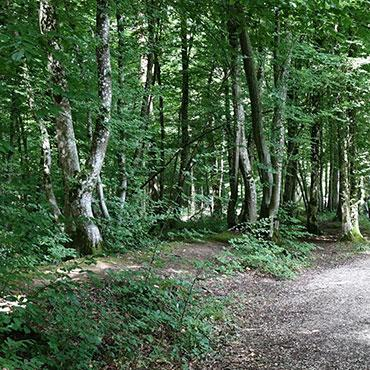 Sentier du Pic Noir - Hautvillers